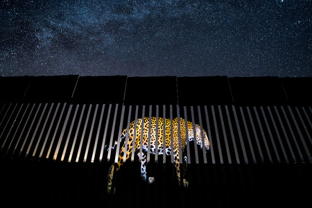 C Alejandro Prieto Wildlife Photographer Of The Year