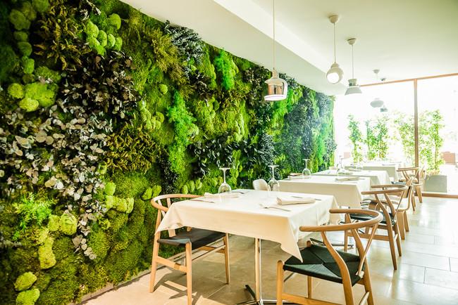 Los jardines verticales una tendencia al alza for Plantas recomendadas para jardin vertical