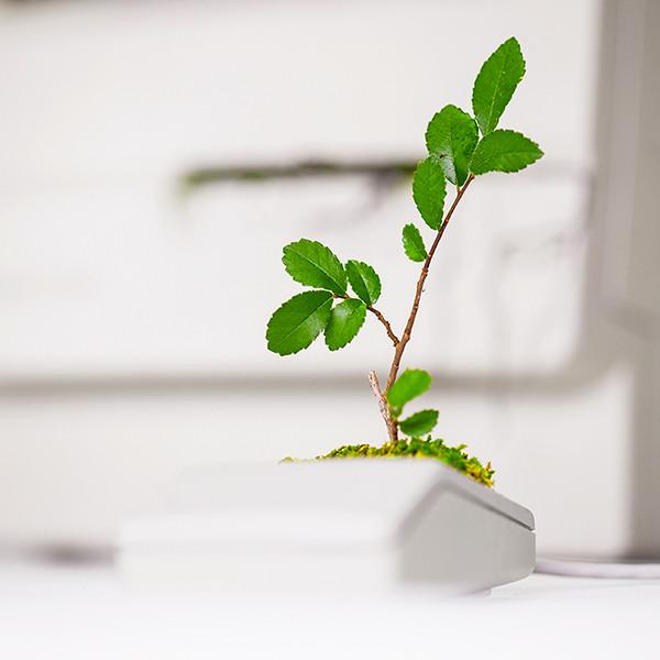 Plant You Mac Macbonzai Monsieur Plant 2016 2 Instgram