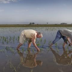 Foto 4 de 14 de la galería la-produccion-de-los-cereales-con-base-de-arroz en Vitónica