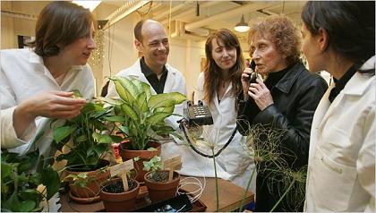 Plantas que llaman por teléfono ante la carencia de agua