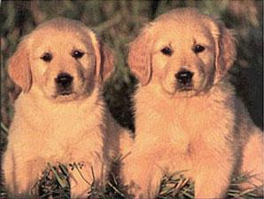 Animales malignos el mito de que el hombre es malo y los - Es malo banar mucho a los perros ...