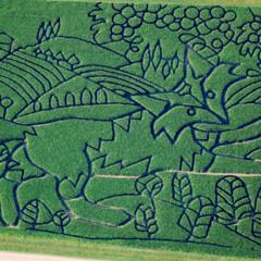Foto 4 de 5 de la galería campos-de-maiz-literarios en Papel en Blanco