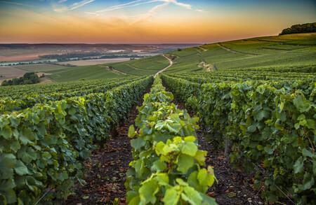 Este año habrá un 60% menos de champán debido a los fenómenos meteorológicos extremos