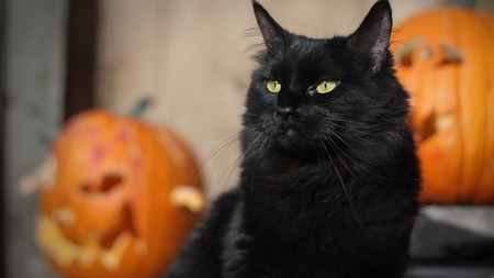 halloween disfraz lbd