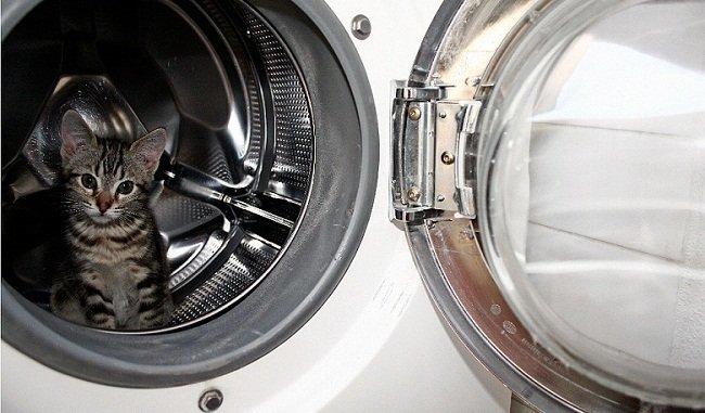 lavadora-gato.jpg