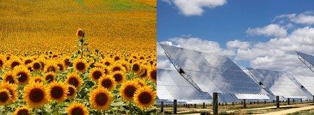 Biocarburantes VS Electricidad: plantas frente a paneles solares