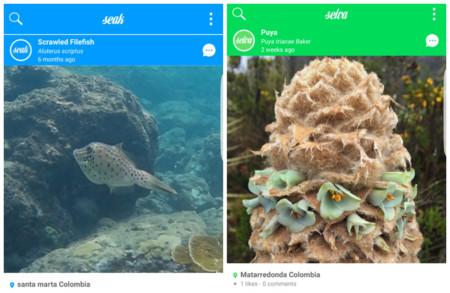 'Seak' la app que celebra la belleza de los océanos, ahora tiene a 'Selva' su nueva aplicación hermana