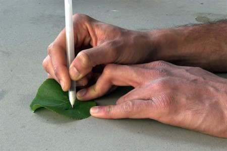 Joe Wang Pens Writing On Leaf