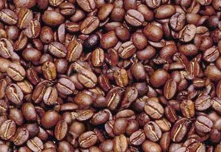 Para oler más de tres perfumes, granos de café