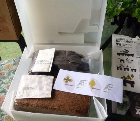 seed-box-cocina1.jpg