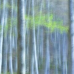 Foto 5 de 10 de la galería arte-en-la-naturaleza en Xataka Foto