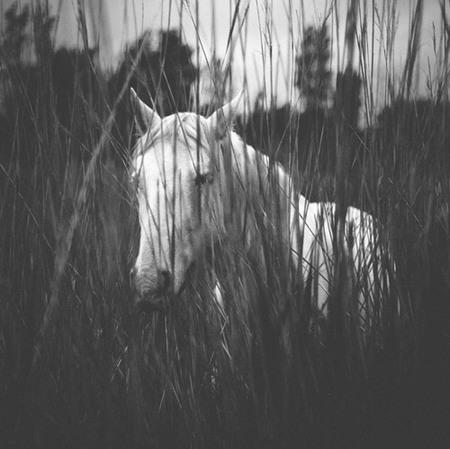 Ibai Acevedo - potro blanco en negro