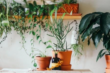 Agosto ya está aquí: consejos para que tus plantas sigan vivas cuando vuelvas a casa tras las vacaciones