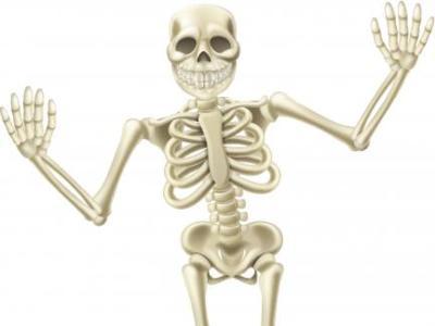 Diez curiosidades sobre los huesos que quizás no conocías