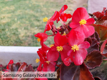 Samsung Galaxy Note 10plus Macro Dia 02