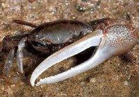 Criaturas indiscutiblemente malformadas: la singular asimetría morfológica