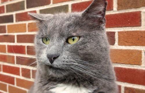 Las emociones de los gatos no son tan difíciles de interpretar, pero las mujeres lo hacen mejor que los hombres