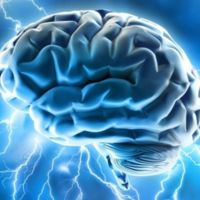 ¿Un cerebro para los hombres y otro para las mujeres? Los científicos desmienten esta teoría