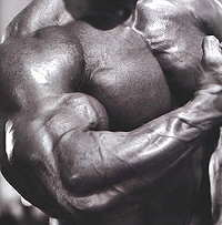Óxido nítrico para el desarrollo muscular