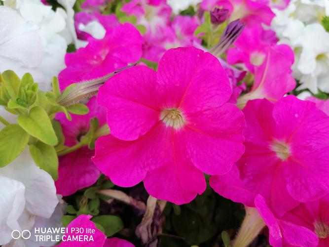Foto de Fotos tomadas con el Huawei P30 Lite (57/153)