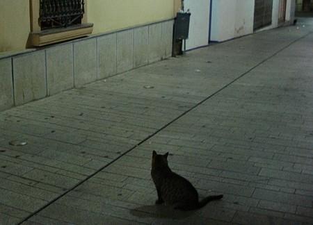 gatico-solitario