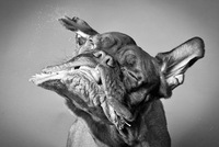 Carli Davidson, retratando animales