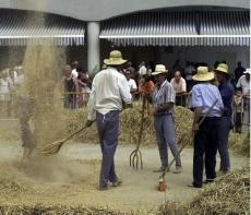 VIII Jornadas gastronómicas del arroz en la Ampolla, en el Delta del Ebro