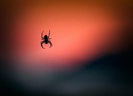 El inmenso desafío tecnológico que es hacer una tela de araña
