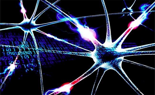 Simulación cerebro humano
