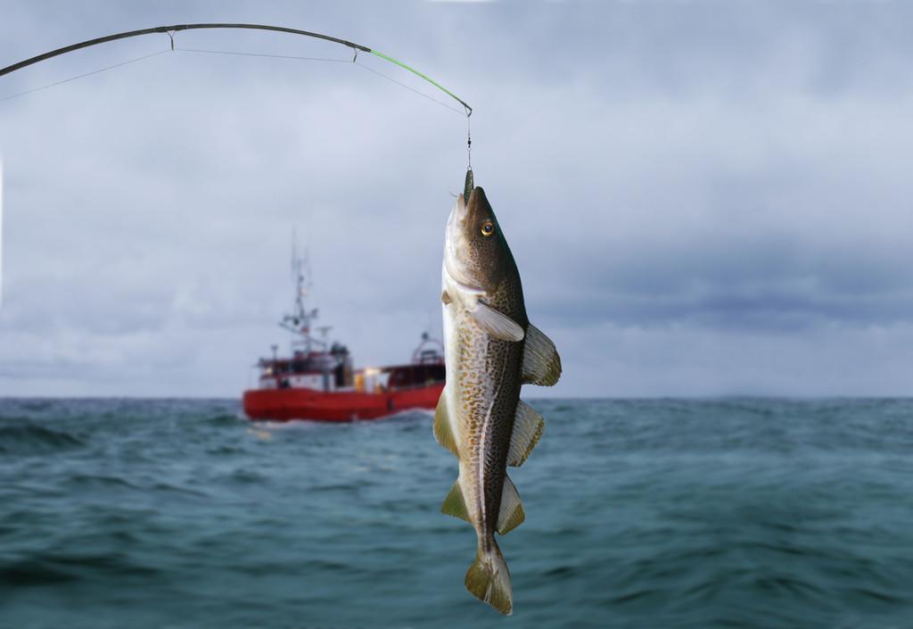 El cambio climático eleva de forma preocupante la presencia de mercurio en el pescado (y lo sabemos gracias a Michael Phelps)