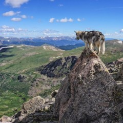 Foto 3 de 9 de la galería loki-the-wolfdog en Diario del Viajero