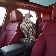Foto 9 de 36 de la galería bentley-bentayga-falconry en Motorpasión