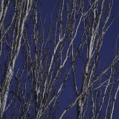 Foto 36 de 41 de la galería muestras-sony-rx10-iv-1 en Xataka Foto