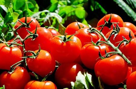 Tomates Trans