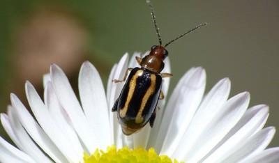 ¿Acabaremos comiendo insectos para ahorrar?