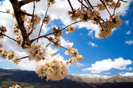 Llega la primavera al valle del Jerte