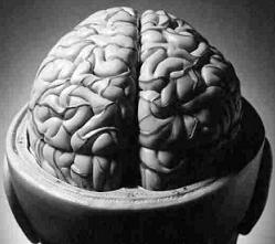 Ejercicios para mantener la mente en forma, grandes beneficios