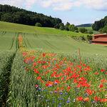 Plantar flores: la sencilla solución para sustituir a los pesticidas y acabar con las plagas
