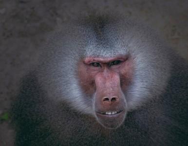 Ya se puede participar en la XXI convocatoria del concurso de fotografía de Zoo Aquarium de Madrid