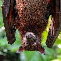 """Los murciélagos son """"bombas de relojería"""" repletos de virus: las bases genéticas de su poderorísimo sistema inmune acaban de ser secuenciadas"""