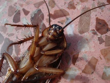 Cockroach 15093 1920