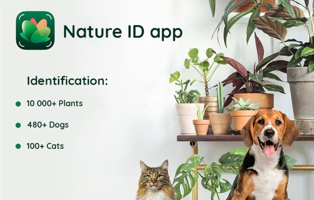 NatureID, o cómo reconocer la especie o raza de más de 10.000 plantas, 480 perros y 100 gatos con solo una foto