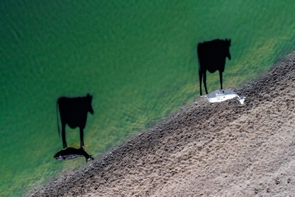 Two Moo by LukeMaximoBell