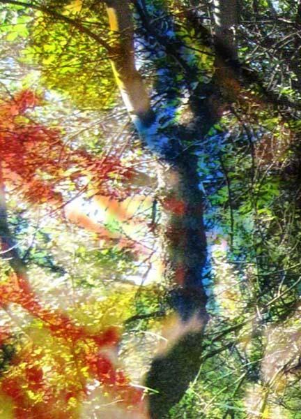 Talleres de fotografía y pintura en la naturaleza para padres e hijos