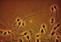¿Cuántos espermatozoides expulsan diferentes especies de animales?