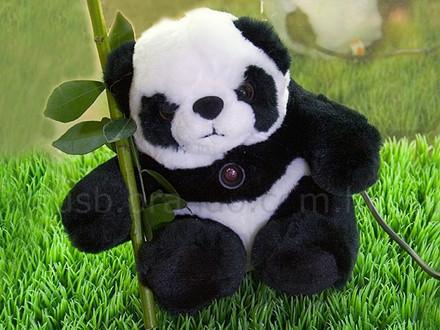 Panda webcam USB