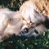 Las mejores ofertas en alimentación y chuches para mascotas en El Corte Inglés, Kiwoko y Miscota para que estén más contentos en casa