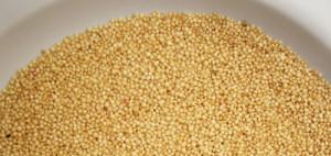 Amaranto, un cereal hiperprotéico