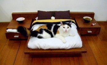 17 detalles decorativos para que tu gato sienta que está en su casa